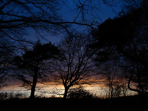 Rempstone Forest Sunsets