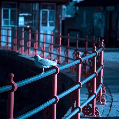 gull on railings
